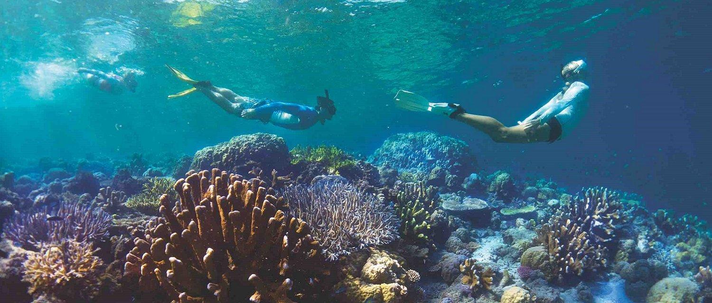snorkeling solomon islands-1-1