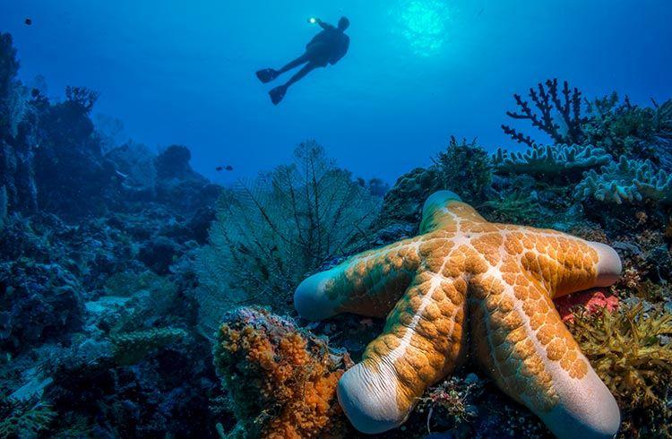diving-solomon-islands travel tours